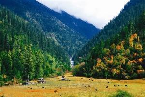 西藏-【尚·深度】西藏、拉萨、林芝、四飞10天*行摄藏东南<波密桃花沟,墨脱高山杜鹃,拉萨品牌五星酒店>