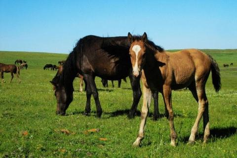 呼和浩特、鄂尔多斯、双飞5天*内蒙古大草原