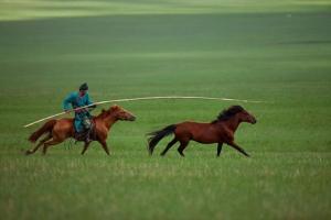 内蒙古-【尚·深度】呼和浩特、鄂尔多斯、双飞5天*鄂尔多斯草原*希拉穆仁草原*响沙湾沙漠*成吉思汗陵<双草原联游>