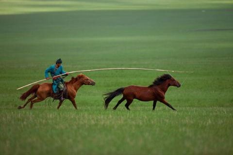 内蒙古 鄂尔多斯 呼和浩特-【皇牌内蒙】内蒙希拉穆仁大草原、响沙湾双飞5天