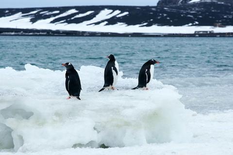 【臻逸*猎奇】海恩典号*南极阿根廷巴西(极地观冰,南美探秘)22天之旅