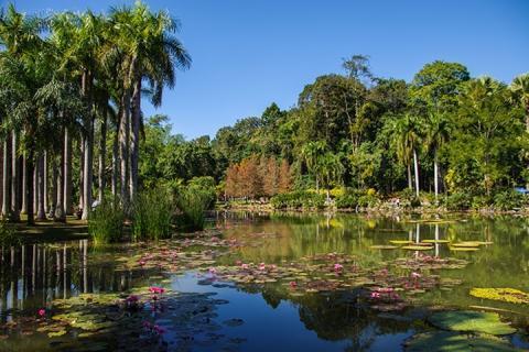 西双版纳-云南当地玩乐西双版纳1日游 勐仑植物园+傣族园(等待确认)
