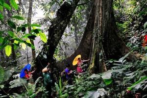西双版纳-云南【当地玩乐】西双版纳原始森林公园1日游*等待确认