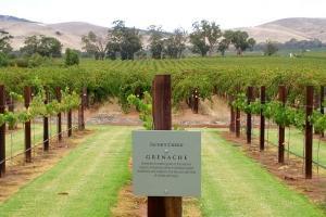 澳大利亚-【当地玩乐】澳洲巴罗莎峡谷酒乡之旅一日游