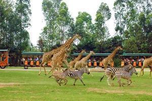 长隆-【湛江出发】广州长隆香江动物园大马戏欢乐世界汽车2天