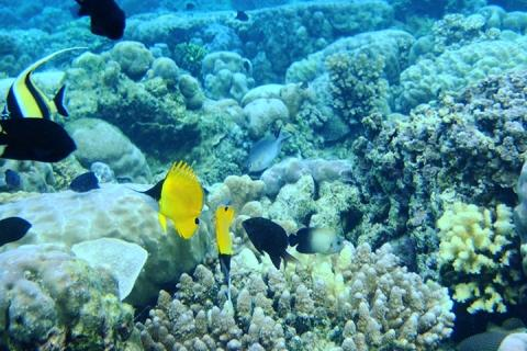 壁纸 海底 海底世界 海洋馆 水族馆 480_320