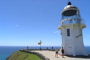 新西兰-【当地玩乐】新西兰岛屿湾观海豚+九十英里海滩滑沙3天2晚自由行套餐(派希亚往返)  .等待确认