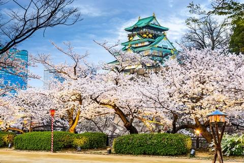 东京 大阪 名古屋-【跟团游】日本本州6天*春之恋赏樱<广州往返,FSCJ,佛山自组>