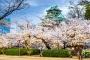【跟团游】日本本州6天*春之恋赏樱<广州往返,FSCJ,佛山自组>