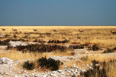温得和克 多哈-【跟团游】纳米比亚11天*惊艳非洲*北京往返*等待确认