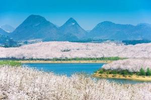 贵州-【花漾黔行】贵州包列3-5天*平坝千亩樱花节*黄果树*3月10日浪漫百花会