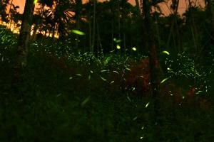 沙巴-【吉隆坡一日游】瓜拉雪兰莪萤火虫一日游
