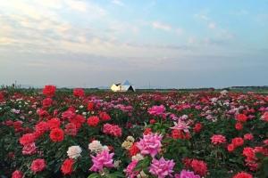 佛山-【亲子游】佛山1天*赏花*宝苞农场直通车<不含餐>