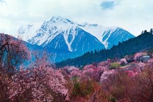 西藏-【湛江飞】重庆拉萨林芝桃花沟三飞11天*人气团