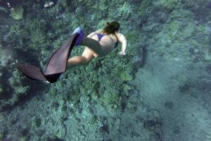 海岛-【自由行】美娜多5天*机票+4晚美娜豪华酒店,含接送,赠送布纳肯浮潜一日游*广州往返*等待确认<潜水套餐>