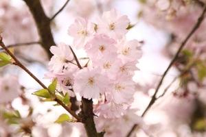 大理-【佛山】花伴语·云南昆明丨大理樱花丨腾冲和顺6天*广昆高铁