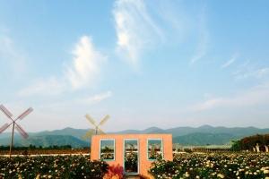 赏花-【赏花】从化1天*天适樱花园*宝趣玫瑰园*双园赏花<不含餐>