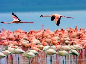 迪拜-【跟团游】肯尼亚、阿联酋12天*五大国家公园+两大湖+(新/老)树顶酒店+马赛篝火烤全羊晚会*上海往返*等待确认<动物大迁徙>