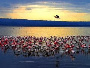 肯尼亚-【跟团游】肯尼亚安博塞利远眺乞力马扎罗10天*盛宴迁徙季*北京往返*等待确认