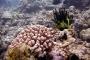 【典·猎奇】美娜多5-6天*精选*活力浮潜<班达尼莫水上活动中心,含浮潜装备,深潜理论课程,布纳肯出海浮潜,耶稣像>