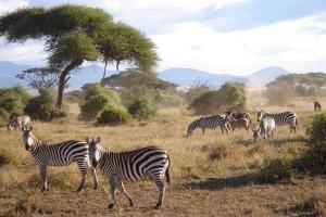 肯尼亚-【跟团游】坦桑尼亚、肯尼亚12天*追踪动物*迁徙之旅B*北京上海广州往返*等待确认