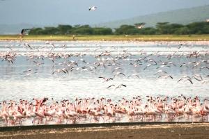 """肯尼亚-肯尼亚 10天7晚动物大迁徙""""深度之旅"""""""