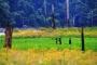 【尚·猎奇】马来西亚槟城/兰卡威、霹雳州5/6天*奇乐*绿野仙踪<柏隆皇家雨林日间徒步探秘,2晚柏隆雨林度假村连住,班丁岛竹筏漂流,槟城新关仔角琳琅美食>