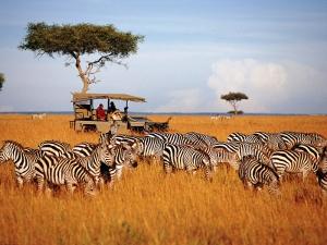 肯尼亚-【跟团游】肯尼亚亲子狂野迁徙季10天*大手牵小手*北京往返*等待确认