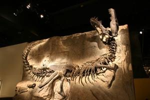 落基山-【尚·深度】加拿大东西岸15天*侏罗纪探秘<落基山国家公园>