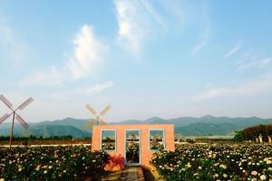 佛山-【佛山】从化1天*宝趣玫瑰世界第三届玫瑰文化节*采摘时令水果