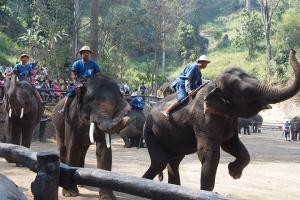 泰国-泰国【当地玩乐】代订清迈湄丹地区大象营+长颈族一日游*等待确认
