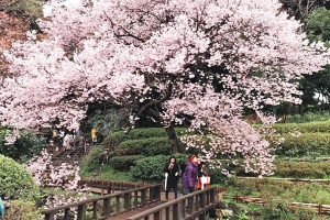 温泉-【尚·博览】日本本州6天*经典周游<品质保证>