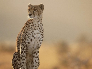 列支敦士登-【跟团游】肯尼亚10天*越野车+内陆飞机*上海往返*等待确认<动物大迁徙>