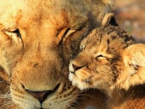 肯尼亚-【跟团游】肯尼亚10天*越野车+内陆飞机*上海往返*等待确认<动物大迁徙>
