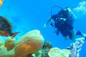 海洋公园-【潜水】美娜多6/7天*持证休闲潜水*广州直航<布纳肯海洋公园、专业潜导、多次潜水>