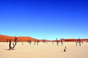 南非-【尚·博览】南非、纳米比亚14天*魅力非洲<比林斯堡公园追踪动物,酒庄之路参观葡萄酒山谷,苏斯丝黎探秘古老沙漠,造访辛巴红泥人部落,鲸湾品尝特色海鲜餐>