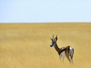 纳米比亚-【跟团游】非洲纳米比亚12天*地球标记*世界遗产*轻度探险*北京往返*等待确认
