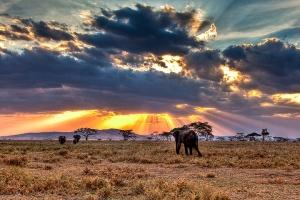 肯尼亚-【尚·博览】肯尼亚、坦桑尼亚、埃塞俄比亚14天*游猎东非<游猎马赛马拉、塞伦盖蒂,登恩戈罗火山口,寻迹古人类化石,烤肉餐厅百兽宴>