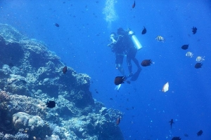 海岛-【潜水】美娜多6天*初级潜水员考证之旅*深圳直航<专业教练教学,专业装备配备,免签证>