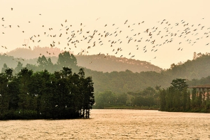 佛山-【跟团游】佛山1天*散客<美的鹭湖探索王国,佛山>