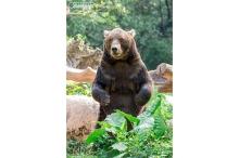 野生动物世界 广州长隆