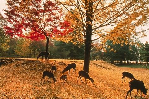 日本-【跟团游】日本7天*汤泉印象 大阪东京半自助双温泉7日 北京往返*等待确认