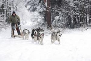 芬兰-【跟团游】北欧、挪威、芬兰10天*含服务费极光之旅*罗凡涅米玻璃屋酒店*圣诞老人村*专车追光之旅+帝王蟹*狗拉雪橇+雪地摩托*香港往返*等待确认<赠WIFI,25人团>