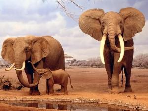 南非-【跟团游】南非观鲸之旅8天*海陆空*北京往返*等待确认