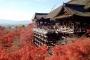 【尚·深度】日本大阪、京都、奈良、和歌山5/6天*本州新玩法*魅力关西<超豪华海景温泉酒店,双古都联游>